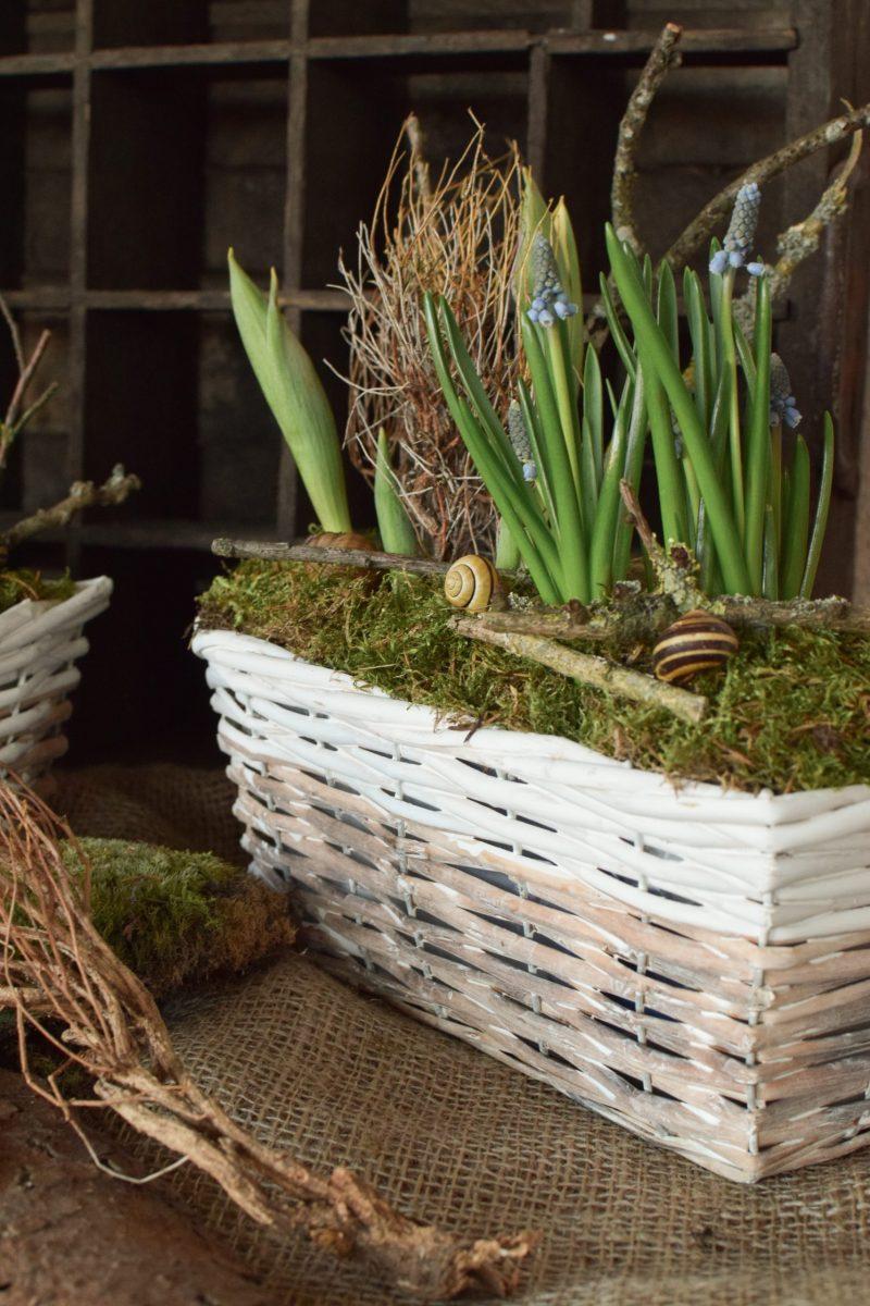 Deko für den Frühling Frühhlingskiste Deko Dekoidee Naturdeko Moos Tulpen Muscari Natürlich dekorieren