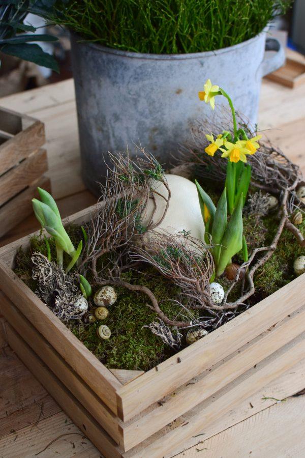 Euphorbia Spinoza kaufen und dekorieren. Naturdeko selber machen. Natürlich dekorieren