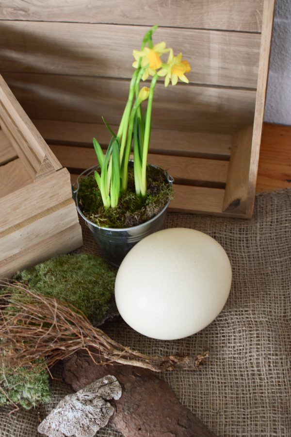 Osterdeko mit Straußenei. Dekoidee Ostern Ei Eier. Dekorieren mit Naturmaterialien