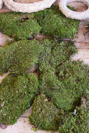 Moos getrocknet kaufen basteln französisches Moos Moosdeko