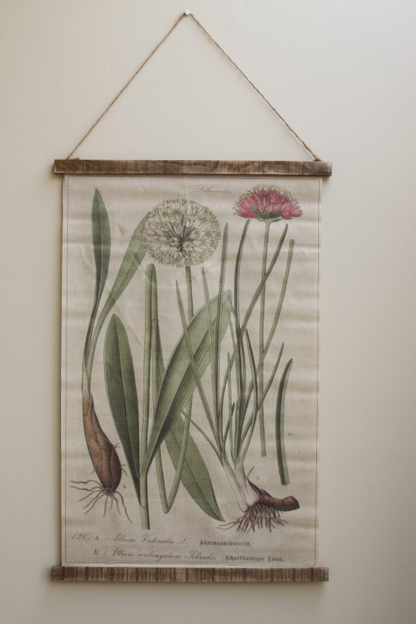 Wandbild Allium Wanddeko botanischer Druck Bild Leinwand Dekoidee Wände Mrs Greenery