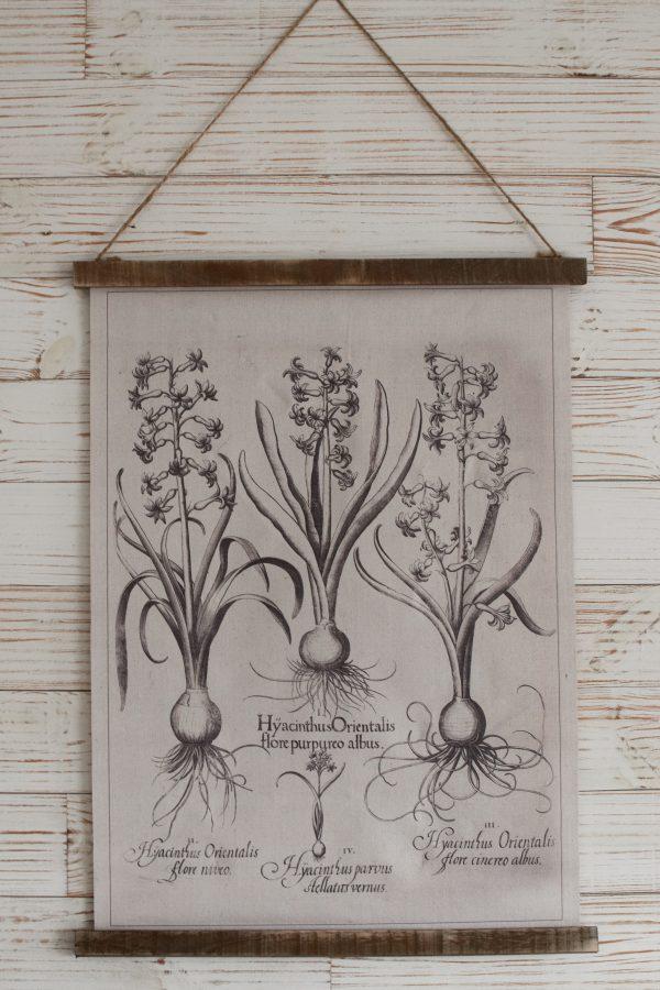 Wandbild Hyachinthe Wanddeko botanischer Druck Bild Leinwand Dekoidee Wände Mrs Greenery