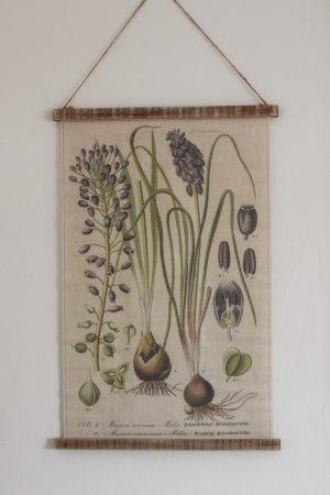 Wandbild Muscari Wanddeko botanischer Druck Bild Leinwand Dekoidee Wände Mrs Greenery