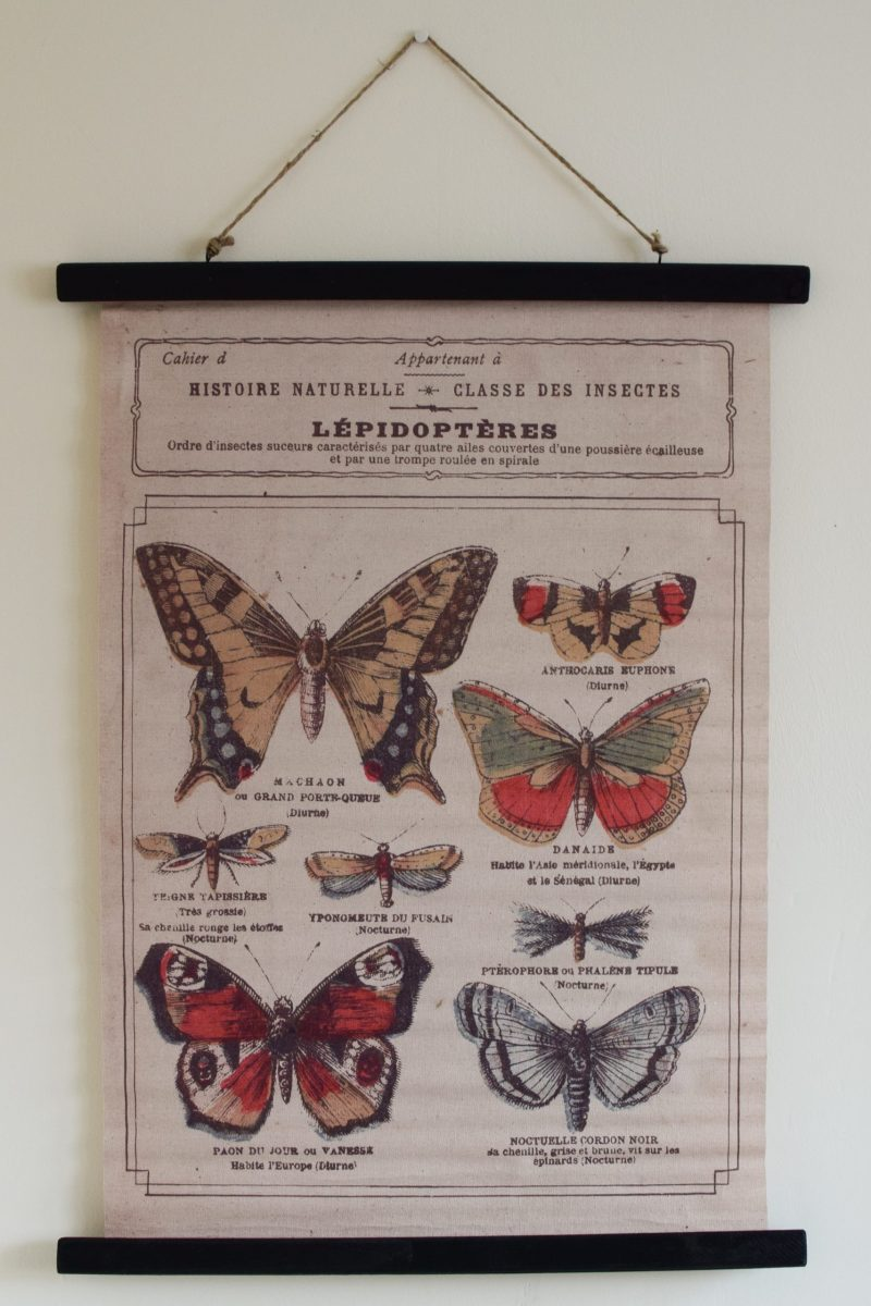 Leinwandbild Canvas Print Wandbild Regenbogen Schmetterling Nr 2302