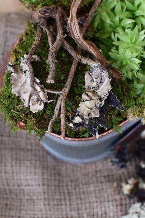 Baumflechte Flechten getrocknet für Naturdeko zum Basteln und Kreativsein vom Mrs Greenery Shop. Die natürliche Dekoidee