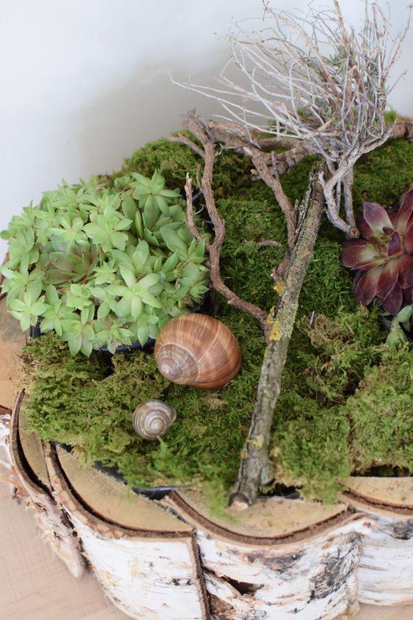 Kreativ-Set Birke mit Sempervivum Hauswurz und Moos DIY zum Basteln und Kreativsein vom Mrs Greenery Shop. Die natürliche Dekoidee