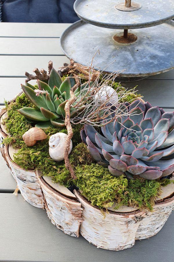 Kreativ-Set Birke mit Sukkulenten und Moos DIY zum Basteln und Kreativsein vom Mrs Greenery Shop. Die natürliche Dekoidee