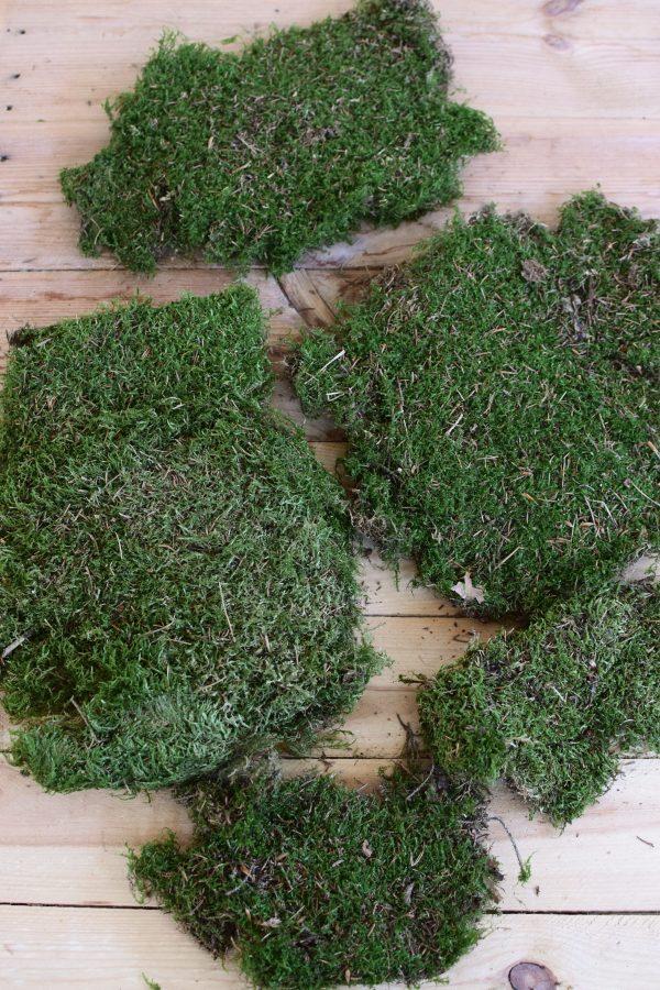 Moos getrocknet kaufen zum basteln und dekorieren für deine Naturdeko Kreationen. Waldmoos Moosdeko