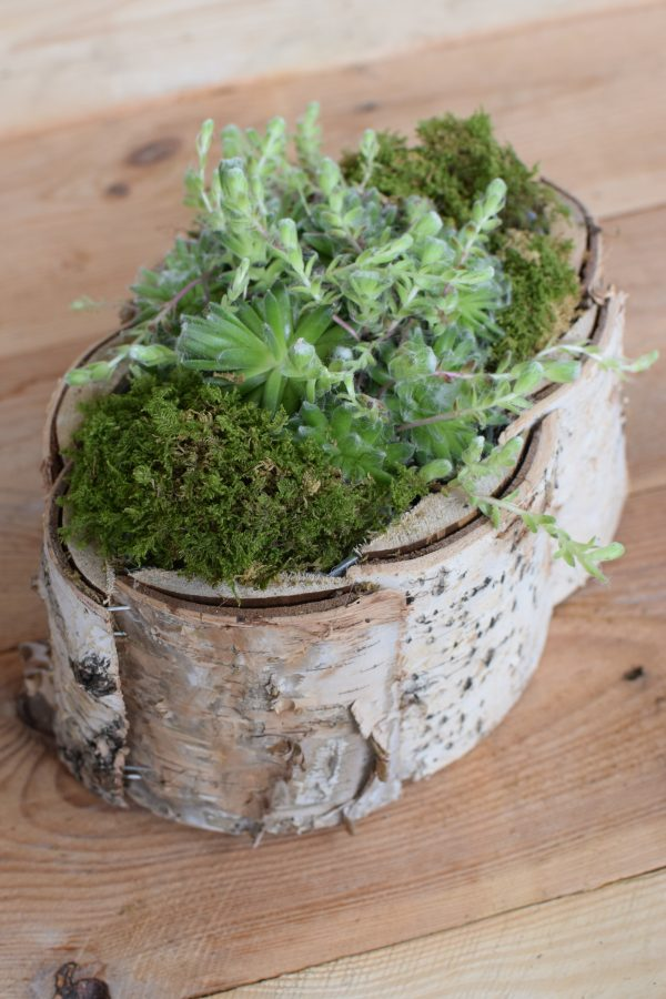 Pflanzschale Übertopf aus Birke zum Basteln und Kreativsein vom Mrs Greenery Shop. Die natürliche Dekoidee