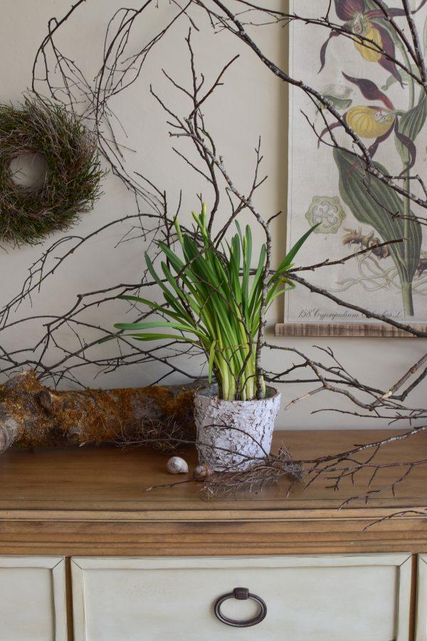 Übertopf aus Rinde weiss. Die natürliche Dekoidee für dein Zuhause. Verschönert deine Pflanzen im Handumdrehen. Topf Rindentopf