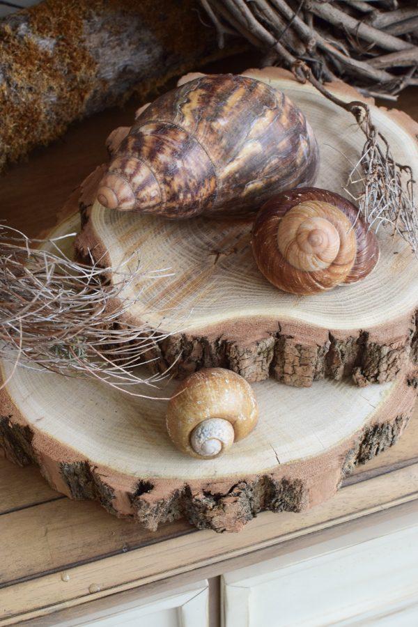 Baumscheibe Akazie Naturdeko Kreativsein Basteln Dekoidee