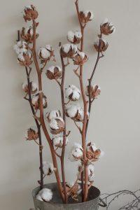 Baumwollblüten Baumwolle getrocknete Blüten Naturdeko Kreativsein Basteln Dekoidee