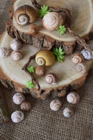 Schnecken Set Naturdeko Deko mit Natur Schneckenhaus Schneckenhäuser gestalten kreativsein basteln Mrs Greenery