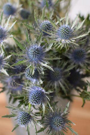 Disteln Orion Qstar blau: Deko mit Naturmaterial frisch und getrocknet Naturdeko Kreativsein Basteln Dekoidee