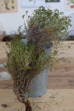 Euphorbia Spinoza grün mit Blätter getrocknet kaufen und dekorieren. Naturdeko selber machen. Natürlich dekorieren
