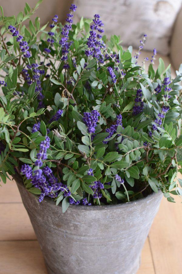 Kreativsein mit Pistaziengrün und Lavendel. Dekoidee mit Natur Strauß einfach selber machen