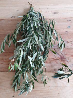 Olivenzwei Olive. Perfekt für Greenery Sträuße und Kränze. Trocknet wunderschön ein.