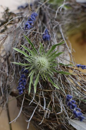 Disteln Sirius Questar grün: Kranz Kränze Deko mit Naturmaterial frisch und getrocknet Naturdeko Kreativsein Basteln Dekoidee