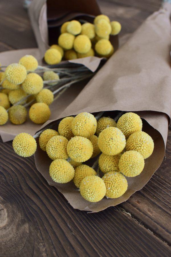 Craspedia getrocknet eignet sich hervorragend für deine Naturdekoidee. Die gelben Trommelstöcke sind tolle Trockenblumen. Deko Deko mit Naturmaterialien