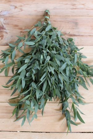 Eukalyptus Parvifolia. Buchsersatz. Perfekt für Greenery Sträuße und Kränze. Trocknet wunderschön ein.