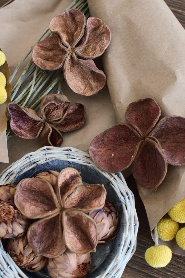 Landlotus getrocknet eignet sich hervorragend für deine Naturdekoidee. Die Blüten des Landlotus sind tolle Trockenblumen. Deko Deko mit Naturmaterialien