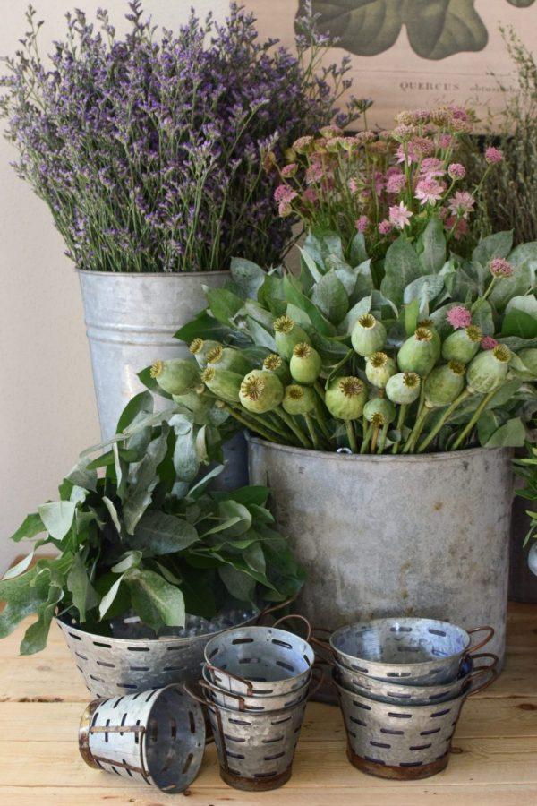 Frisches Greenery aus dem Mrs Greenery Shop: Mohnkapsel, Strandflieder, Thymian, Eukalyptus. Zum Kranzbinden und Kreativsein mit Naturmaterialien
