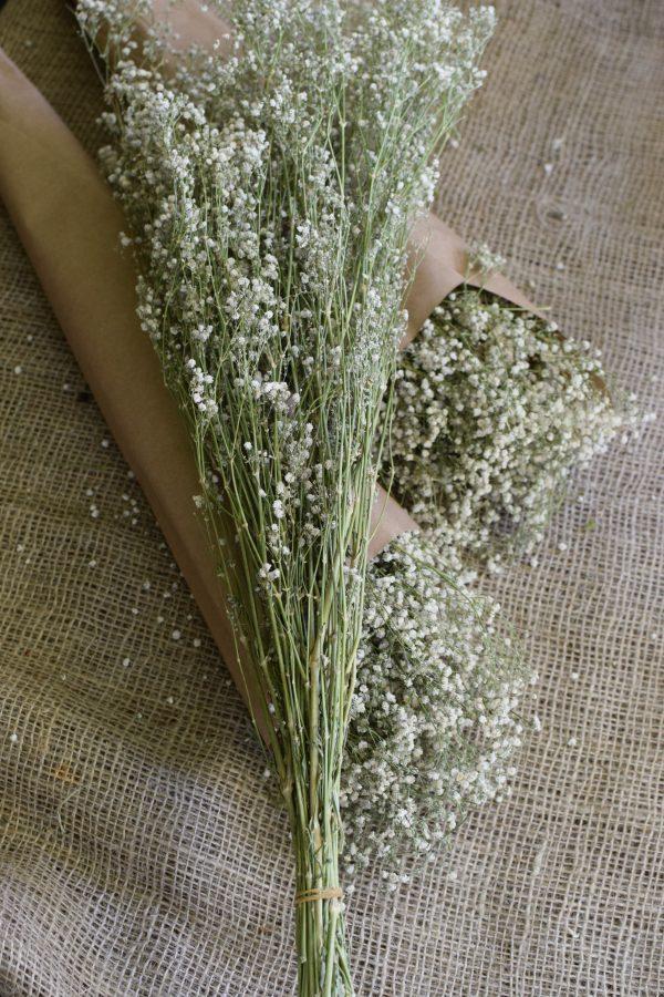 Scheierkraut getrocknet. Trockenblumen: Deko mit Naturmaterial frisch und getrocknet Naturdeko Kreativsein Basteln Dekoidee