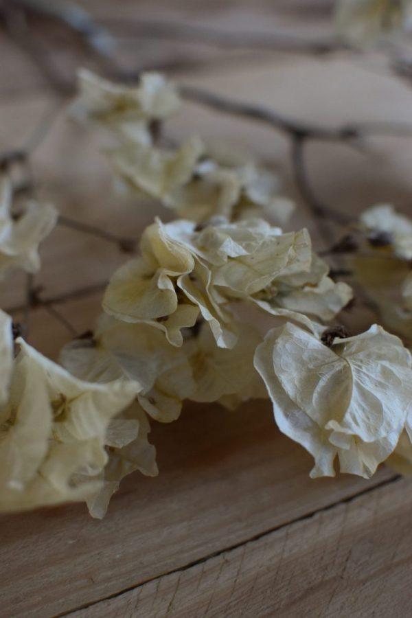 Bougainvillea getrocknet Trockenblumen Kranz Kränze Kranzbinden