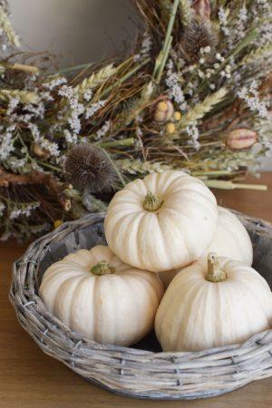 Herbstdeko mit weissen Mini Kürbissen Baby Boo. Der Klassiker der Herbstdeko. Jetzt bestellen! Kürbis klein weiss