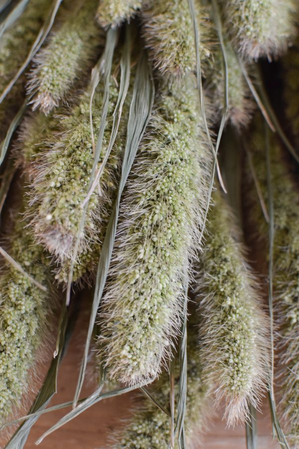 Deko mit Trockenblumen: Borstenhirse getrocknet. Setaria. Kranzbinden Deko mit Naturmaterialien