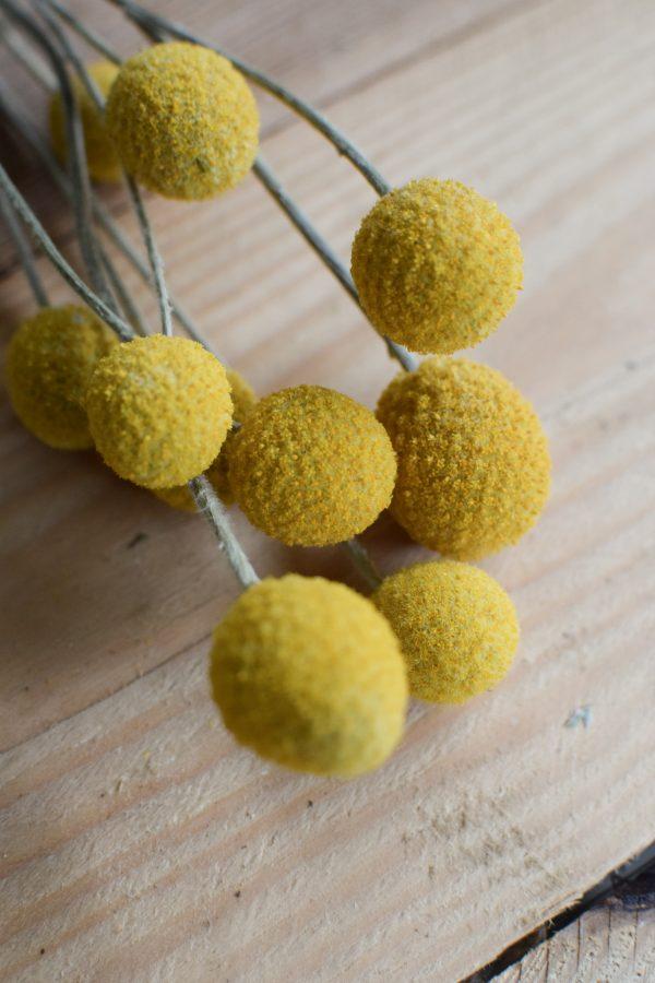 Craspedia getrocknet eignet sich hervorragend für deine Naturdekoidee. Die gelben Trommelstöcke sind tolle Trockenblumen. Deko Deko mit Naturmaterialien biologisch unbehandelt