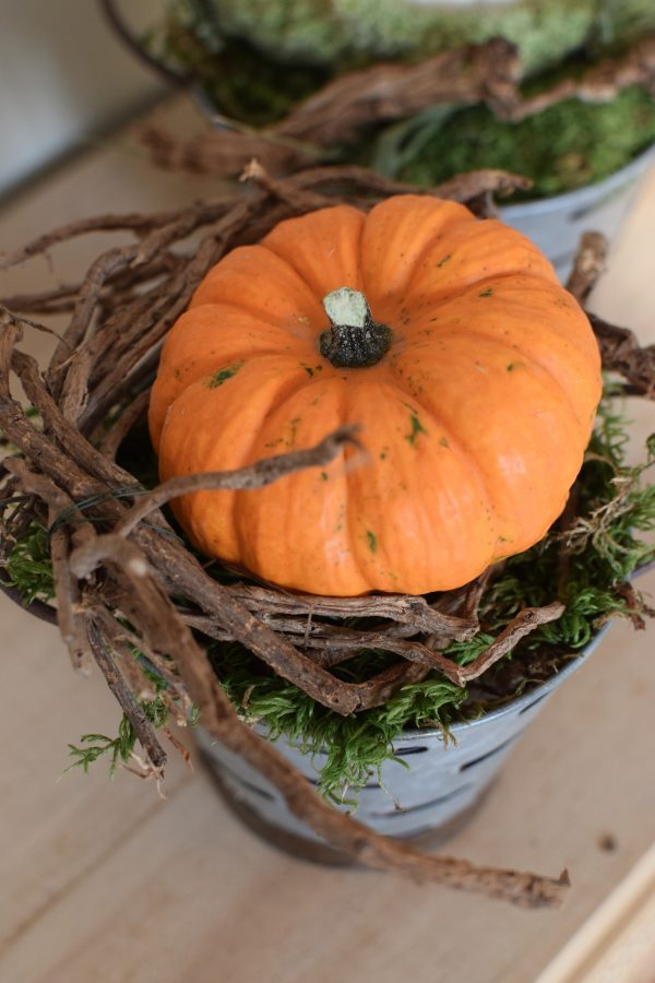 Herbstdeko mit orangenen Baby Boo. Deko Herbst mit Naturmaterialien