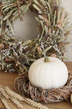Herbstdeko mit weissen Kürbissen. Der Klassiker der Herbstdeko. Jetzt besellen! Kürbis mittel weiss