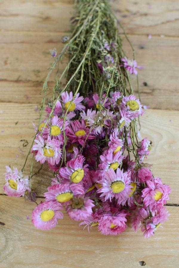Strohblume Acroclinium rosa pink getrocknet im Bund Trockenblumen Kranz Kränze Kranzbinden