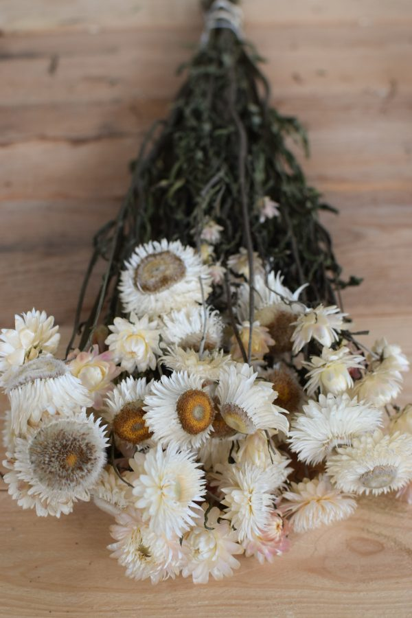 Kreativsein mit Trockenblumen: Strohblumen Vintage mit Blüte weiss. Naturdeko Dekoidee Deko