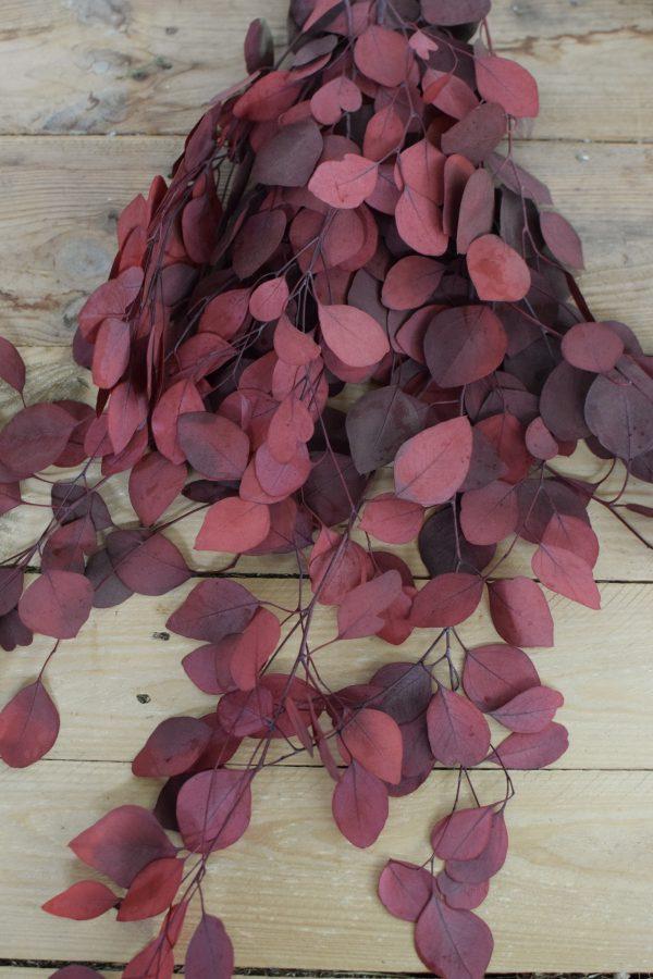 Deko mit Trockenblumen: Eukalyptus populus eucalyptus konserviert Kranzbinden Deko mit Naturmaterialien