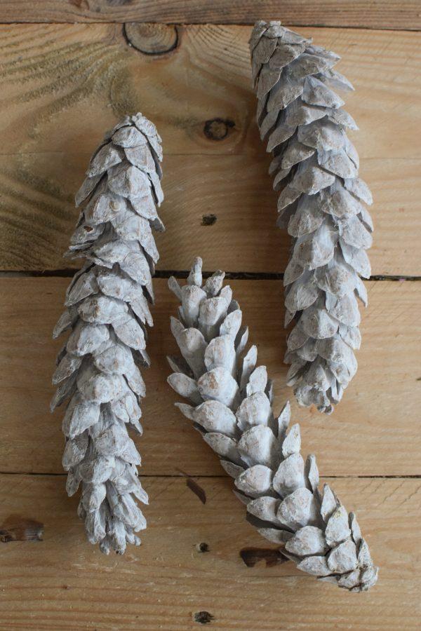 Kieferzapfen getrocknet weiß für deine Naturdeko an Weihnachten und im Herbst Dekoidee Naturmaterialien