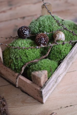 Moos Bollenmoos kaufen bei Mrs Greenery. Naturdeko natürlich dekorieren und kreativsein mit frischem Moos aus der Holzkiste