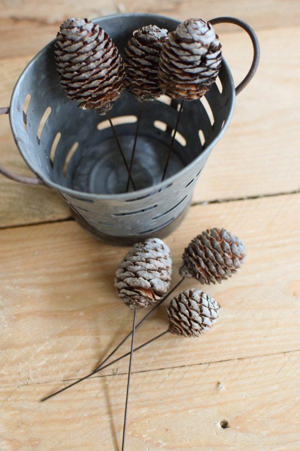 Murii Zapfen mit Stecker getrocknet für deine Naturdeko an Weihnachten und im Herbst Dekoidee Naturmaterialien
