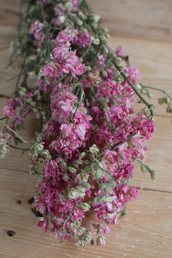 Rittersporn rosa pink getrocknet im Bund Trockenblumen Kranz Kränze Kranzbinden