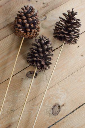 Tannenzapfen Zapfen mit Stecker getrocknet für deine Naturdeko an Weihnachten und im Herbst Dekoidee Naturmaterialien