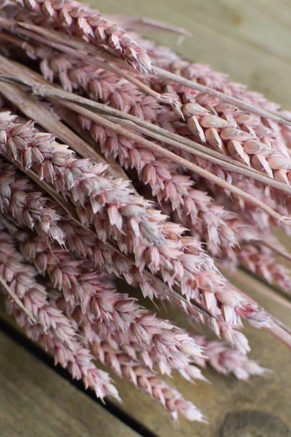 Deko mit Trockenblumen: Weizen rosa gefärbt pink Kranzbinden Deko mit Naturmaterialien