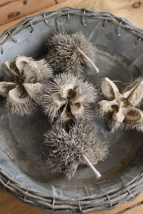 Getrocknete wilde Kastanie für deine Herbst- und Winterdeko. Selbermachen Dekoidee mit Naturmaterialien
