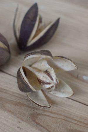 Trockenblume Wildlilie für deine kreativen Naturdekos wie Kränze und Arrangements. Trockenfrucht Trockenblüte kreativsein