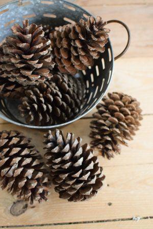 Tannenzapfen Zapfen getrocknet für deine Naturdeko an Weihnachten und im Herbst Dekoidee Naturmaterialien