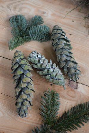 Kieferzapfen getrocknet grün für deine Naturdeko an Weihnachten und im Herbst Dekoidee Naturmaterialien