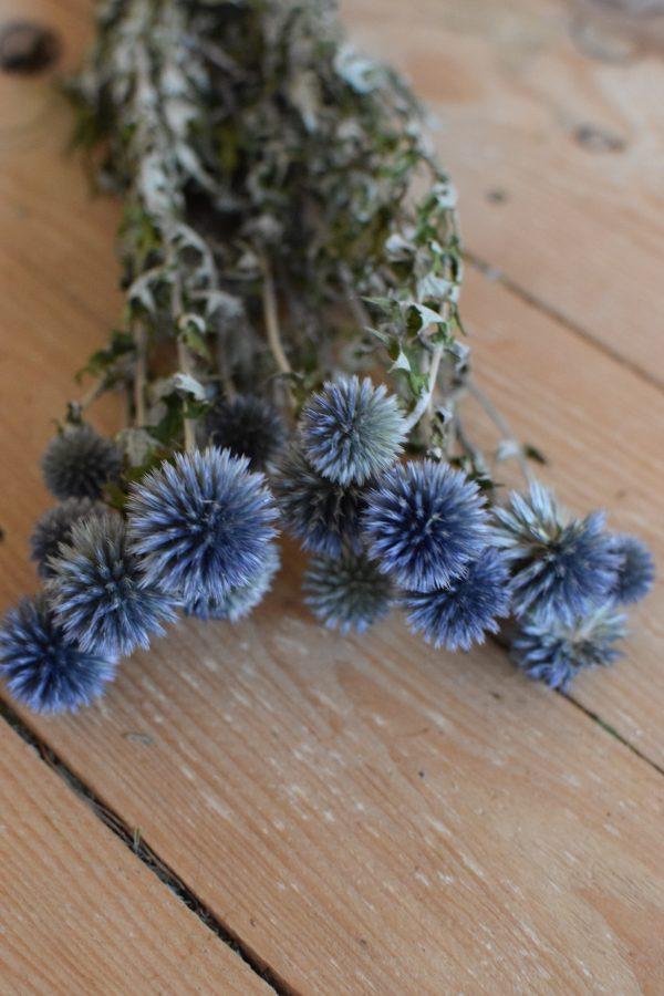Kugeldistel getrocknet Trockenblumen Naturdeko Mrs Greenery getrocknet Distel blau