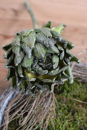 Artischocke getrocknet. Trockenblumen perfekt für deine Naturdeko. Natürlich dekorieren.