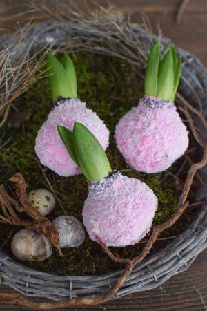 Hyazinthe rosa pink gewachst. Frühlingsblüher Frühlingsdeko mit Naturmaterialien