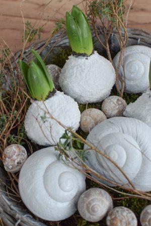 Hyazinthe weiß gewachst. Frühlingsblüher Frühlingsdeko mit Naturmaterialien